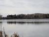 canada-geese-flying-over-lake-wabamun