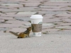 chipmunk-and-starbuck-cup-p1150658
