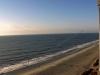 sun-sand-ocean-life
