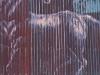 horses-on-corrugated-wall-arizona-1190987-copy